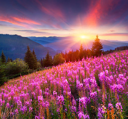 Colorful summer sunrise in the mountains with pink flowers.