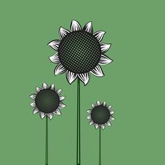Sunflowers flat vector