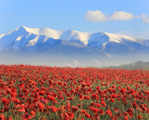 poppy flowers an mountains