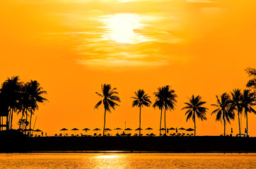 Palm trees in orange glow sunset