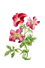 Colorful wildflowers illustration on white background