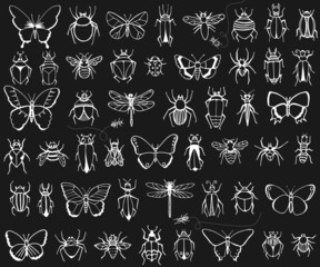 Chalkboard hand drawn insects