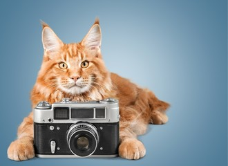 Photo. Little cute kitten with vintage photo camera on a wooden