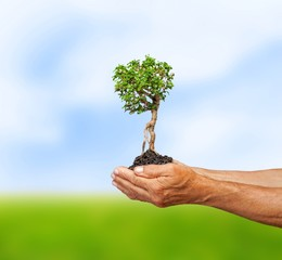 Earth. Trees in human hands