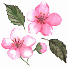 Cherry blossom flower set