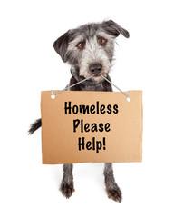 Wall Mural - Homeless Dog Cardboard Please Help Sign