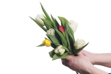 tulips in hands