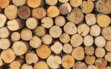 Cross section of the timber, firewood stack for the background