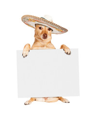 Wall Mural - Cinco De Mayo Dog Carrying Blank Sign