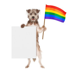 Fototapete - Dog Supporting Gay Rights With Blank Sign
