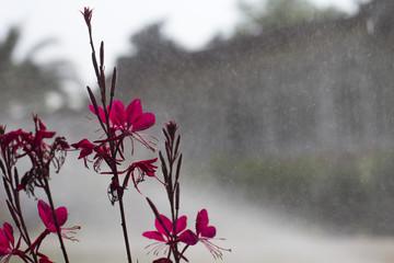 Yağmur ve Çiçek