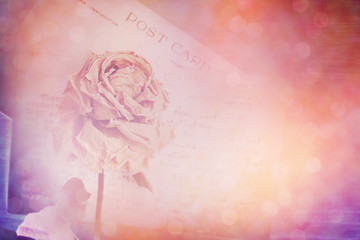 Dry rose and old postcard. Lens flare and bokeh effect, vintage