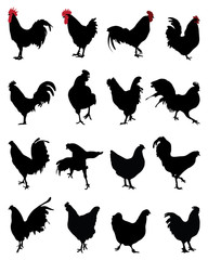 Silhouettes of roosters and hens, vector