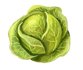 picture of cabbage