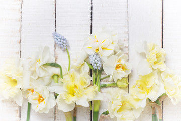 Background with fresh daffodils and muscaries