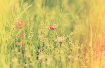 green grass, instagram retro style