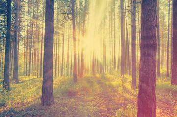 Aluminium Prints Crimson woods, instagram retro style