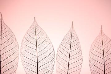 Keuken foto achterwand Decoratief nervenblad Skeleton leaves on pink background, close up