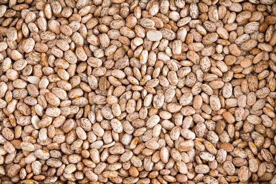 Healthy Brown Pinto Beans for Wallpaper Background