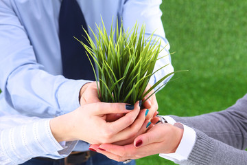 Wall Mural - Close-up of businesspeople hands holding plant together