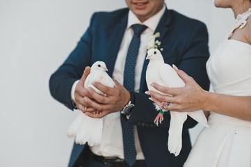 Pigeons in hands 2364.