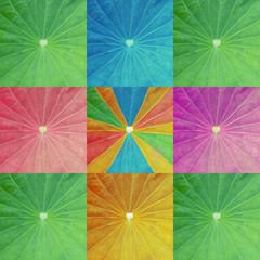 The arts colorful lotus leaf