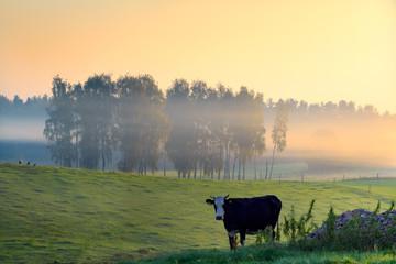 Wiosną Na Polskiej Wsi