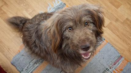 portrait of dog begging for food
