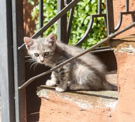 Corchiano (Italy). Cats