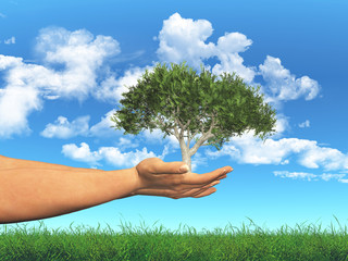 Female hands holding a tree in cupped hands
