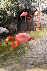 Flamingo2V