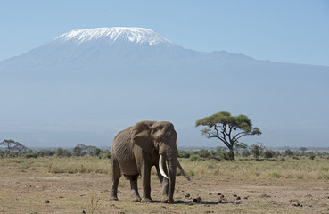 Mt Kilimanjaro with elephant