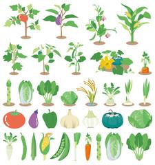 野菜苗アイコン