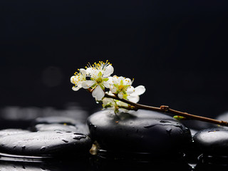 still life with pebble and with lying down cherry blossom