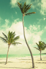 Palm trees growing on sandy beach. Coast of Atlantic ocean