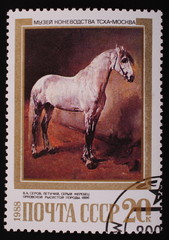 Moscow, USSR-CIRCA 1988: Postage stamp  gray stallion