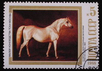Moscow, USSR-CIRCA 1988: Postage stamp  Arabian stallion