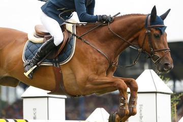 Foto op Plexiglas Paardrijden Fuchs über dem Sprung