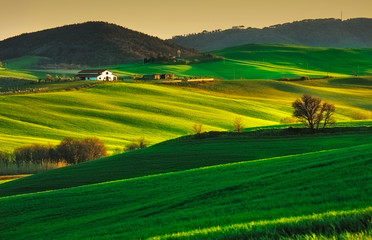 Trees and Farmland near Volterra, rolling hills on sunset. Rural Wall mural