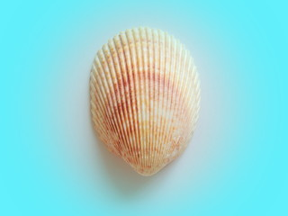Sea shell in turquoise vignette.