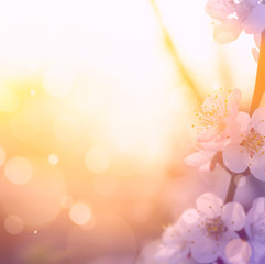 Fototapete - art Spring blossom background
