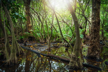 Tropical forest with mangrove trees and lens flare