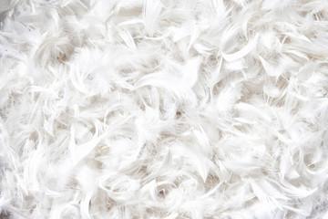 soft, weightless, gentle bird plumage texture for pillow Wall mural
