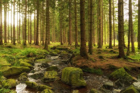 Wald mit kleinem Bachlauf