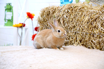 Rabbit on a hay stack with flowers