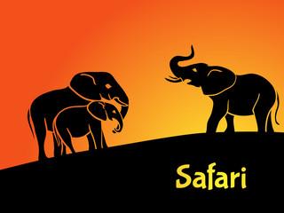 Elephants safari concept