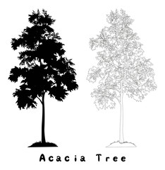 Acacia tree silhouette, contours and inscriptions
