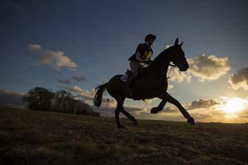 Fototapeta Equus ferus caballus - Horse