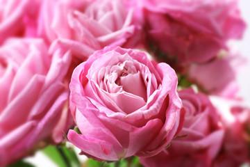Bouquet of beautiful fresh roses, closeup