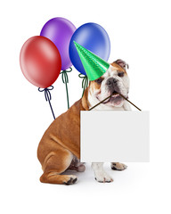 Wall Mural - Birthday Dog Holding Blank Sign With Balloons